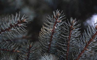 Sustainable Christmas Tree: Alternatives